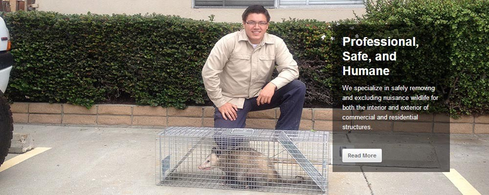 Professional, Safe, and Humane San Diego Animal Removal