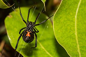 San Diego Spider Removal