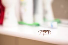 Spider Removal San Diego