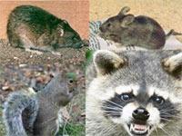 San Diego Animal Removal